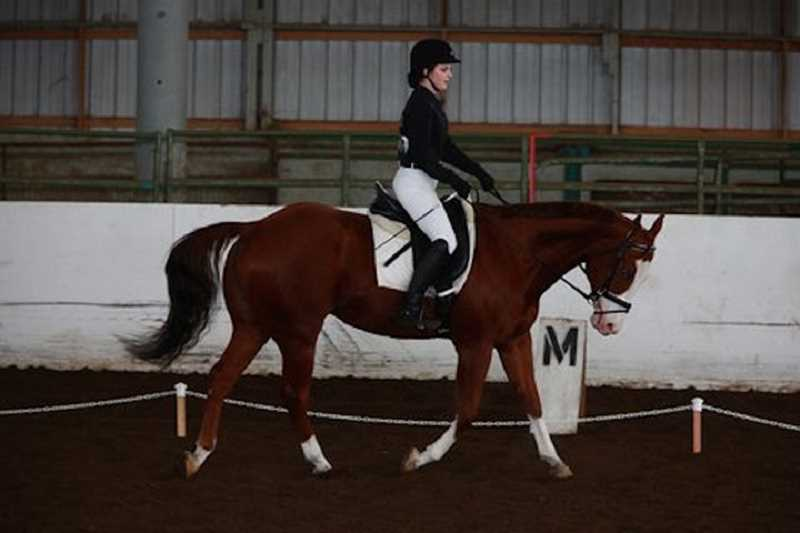 SUBMITTED PHOTO - Wilsonville equestrian athlete Brooklyn James placed 10th in hunt seat equitation at state.