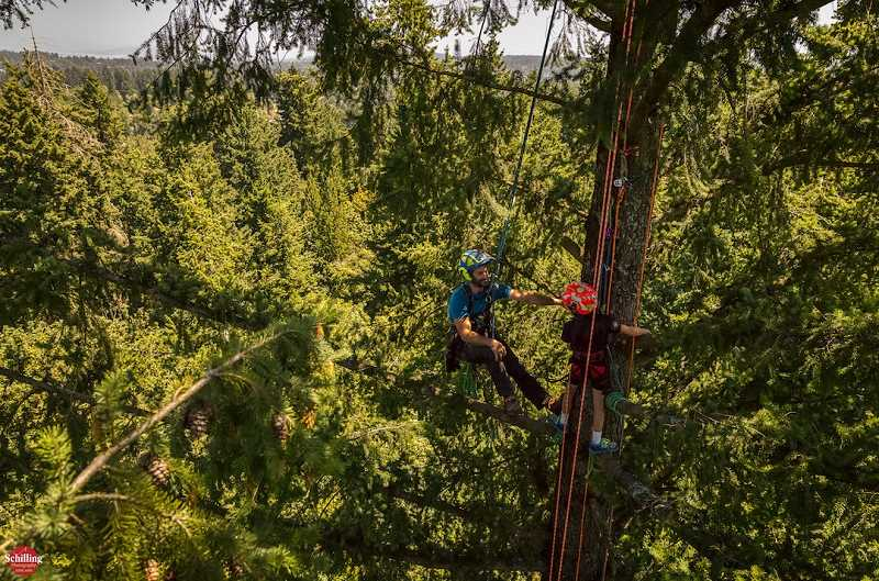 SUBMITTED PHOTO - Want to get a birds eye view of West Linn? Sign up for the tree climbing camp taking place at Mary S. Young Park.