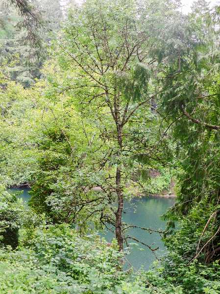 ESTACADA NEWS PHOTO: EMILY LINDSTRAND - The area near this stretch of the Clackamas River is one of the spots that will be included in the city of Estacada's updated parks master plan.