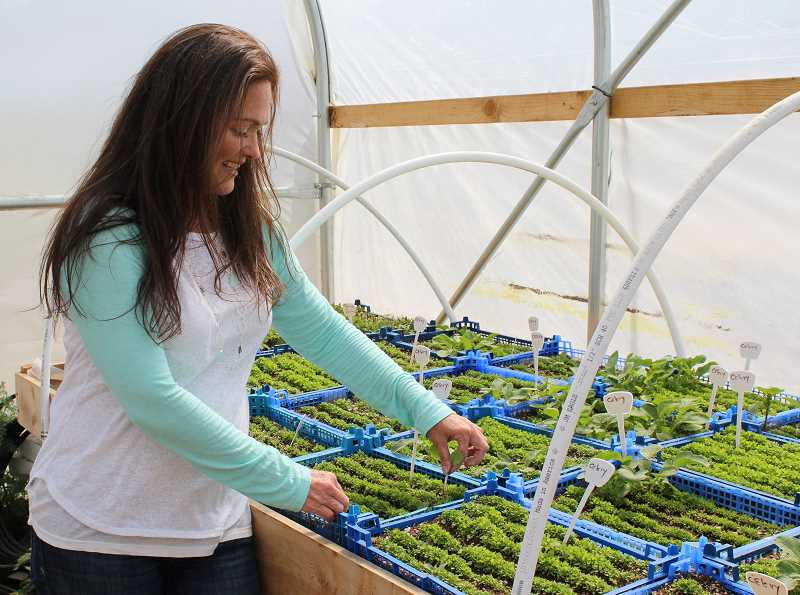 HOLLY M. GILL - Christina Carpenter thins radish starts in her greenhouse on the Organic Earthly Delights farm, where she and her partner, Grant Putnam, are planning to host hundreds of people for the Aug. 21 total solar eclipse.
