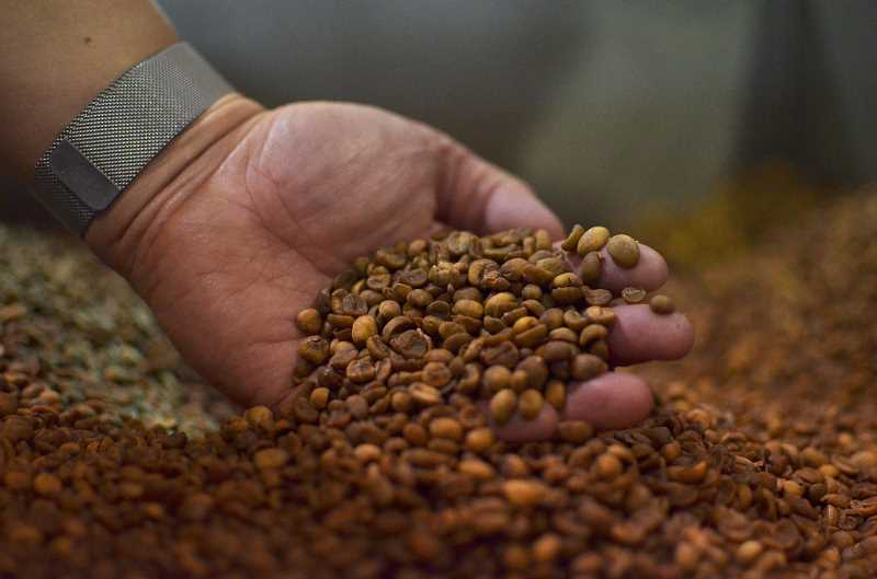 HILLSBORO TRIBUNE PHOTO: JOHN WILLIAM HOWARD - Green coffee beans, with their husks still intact, wait to be poured into the roasing machine at Longbottom Coffe and Tea. The popular cafe has a national following, with loyal customers across the country.