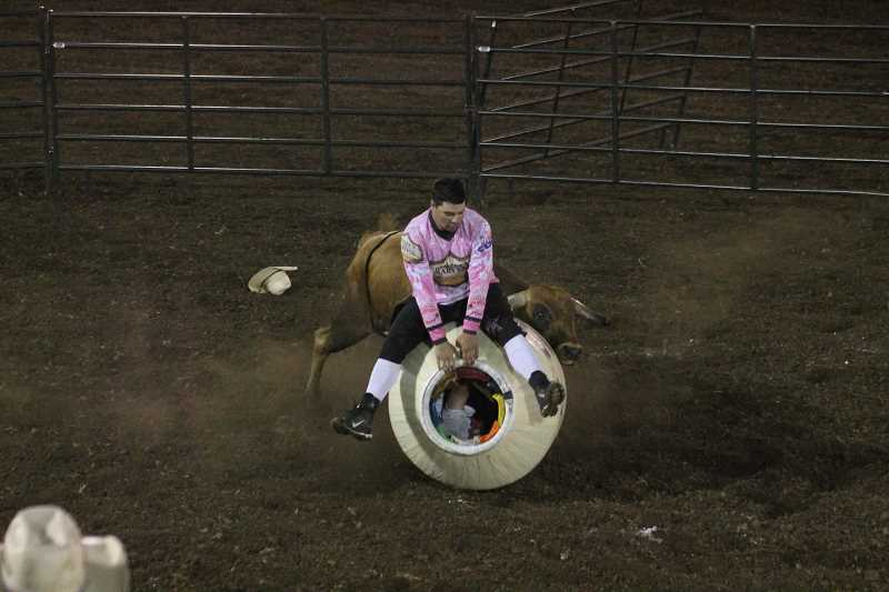 PIONEER PHOTO: CONNER WILLIAMS - Canby's Jason McCall leaps over the barrel while avoiding his bull during the Protect the Harvest Freestyle Bullfighting event at the Coastal Farm and Ranh Challenge of Champions Tour on Saturday, June 24. McCalltook third in the event with a score of 78 points.