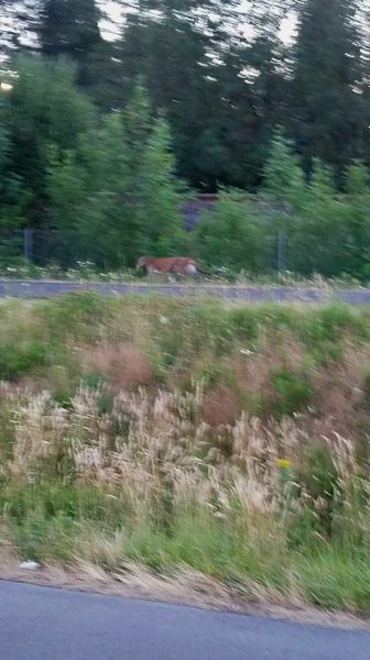 COURTESY OF THE TIGARD POLICE DEPARTMENT - Police in Tigard said this photo was taken of a suspected cougar Friday morning on a trail running parallel to Tigard Street.