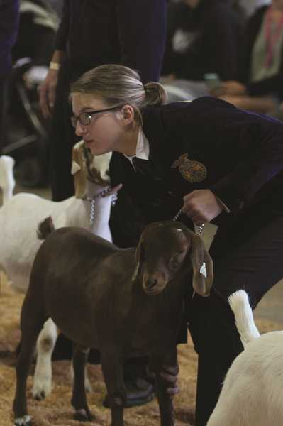 PHIL HAWKINS - Gervais FFA member Kiley Heard won Champion Dairy Goat and Goat Reserve Champion at the Marion County Fair, adding to the FFA program's already prodigious weekend of accolades.