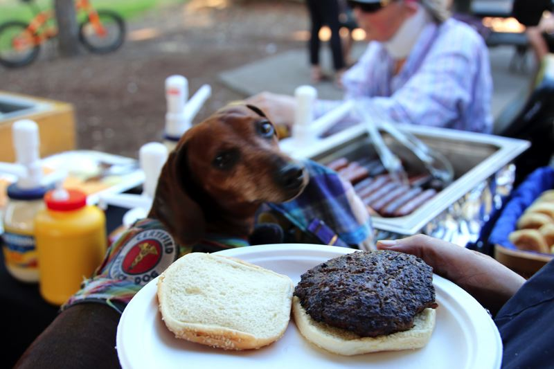 CONTRIBUTED PHOTO: CITY OF GRESHAM - A hungry pooch eyes a tasty burger during a volunteer picnic at Main City Park in Gresham.