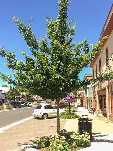ESTACADA NEWS PHOTO: EMILY LINDSTRAND - The city's new street tree master plan outlines how trees should be planted in downtown Estacada and notes that the city will take over maintenance of these trees. A similar plan already existed on Broadway Street in the downtown area.