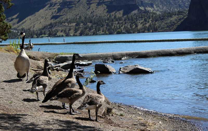 HOLLY M. GILL - The Oregon Health Authority has lifted the advisory for blue-green algae on most of Lake Billy Chinook. Only the Metolius arm of the lake is still affected by the warning.