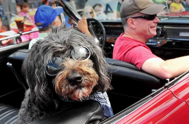 CONNECTION FILE PHOTO - The 'Pooch Parade' leads the pack at Multnomah Days, happening the weekend of Aug. 19-20. Pictured is Tony Leonetti's dog, Fanny, who was in the parade a
