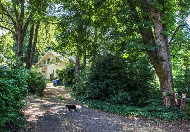 PORTLAND TRIBUNE: JONATHAN HOUSE - An old farmhouse in Pendleton Woods will be demolished, along with most of the trees to make way for more housing.