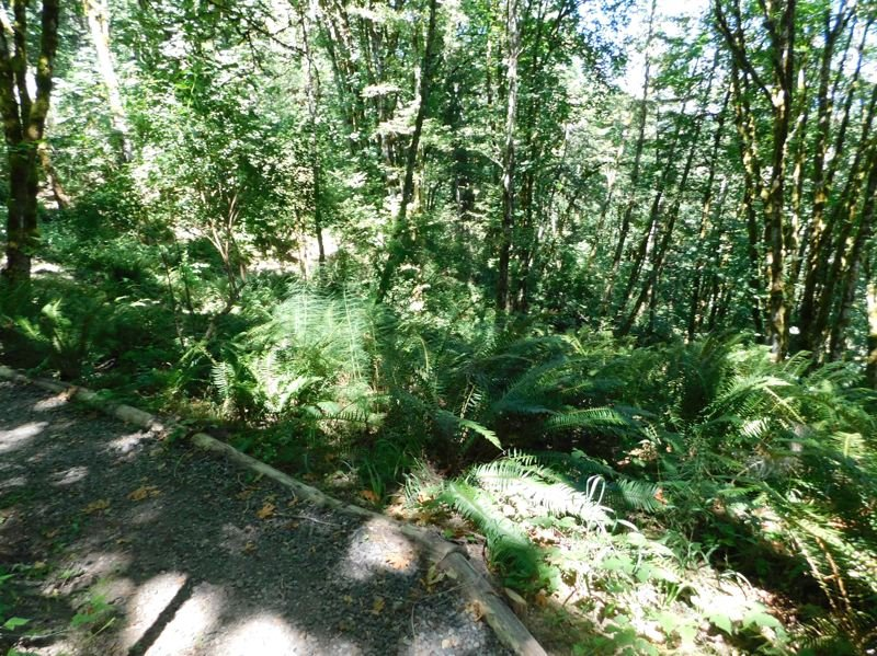 ESTACADA NEWS PHOTO: EMILY LINDSTRAND - A variety of greenery can be seen along the recently completed trail at Milo McIver State Park.