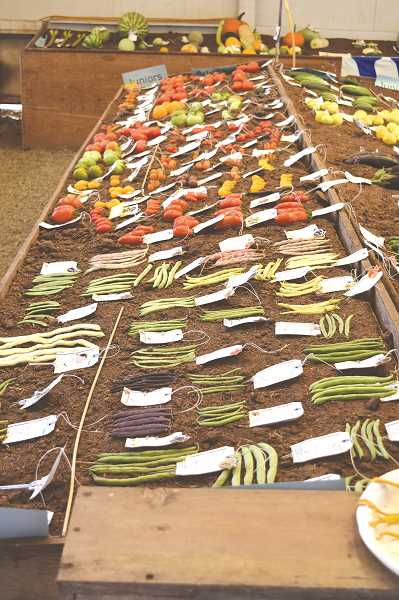 STOCK IMAGE - The deadline to enter the 2017 Clackamas County Fair'scontest for Agriculture Crops – Monday, Aug. 14, at 8 p.m.