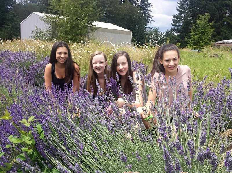 SUBMITTED PHOTO: MICHELLE BOMBET-MINCH - Lavender Girls (from left) Abigail Minch, Lauren Henning, Emily Henning and Audrey Minch harvest lavender to be turned into different products for sale to benefit the Childrens Cancer Association.