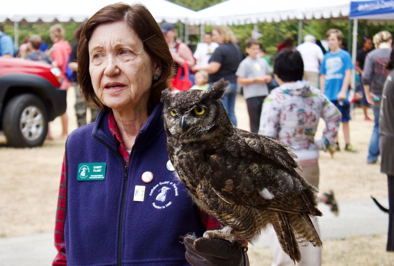OUTLOOK PHOTO: CHRISTOPHER KEIZUR - During the Nadaka Community Festival visitors got to meet Julio, a female Great Horned Owl that is kept by the Audubon Society of Portland.