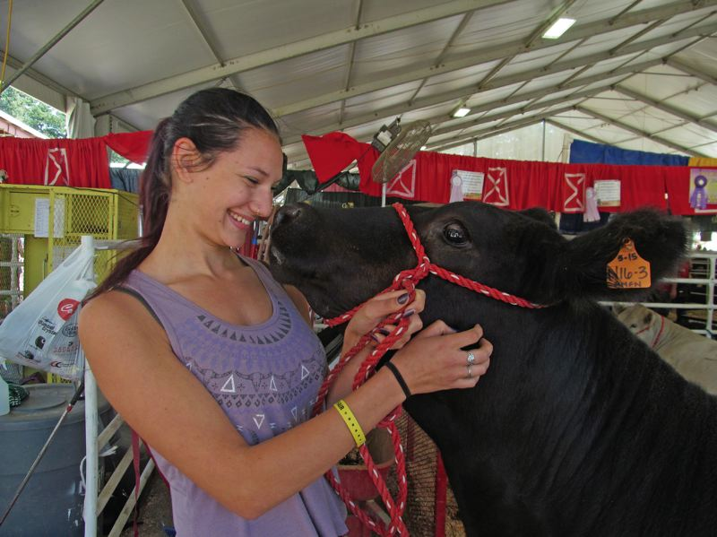 DICK TRTEK - Vanessa Youngsma, 18, a 2017 Clackamas High School graduate, is pictured with Hallelujah, a breeding heifer. The animal won reserve grand champion in its class at the county fair last week.