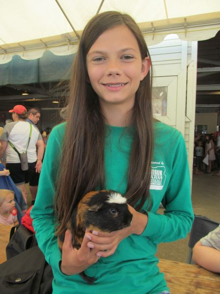 PHOTO BY DICK TRTEK - Carly Shanklin, 14, likes raising guinea pigs because they are entertaining to watch. Jerry, her brindle, white-crested guinea pig was chosen champion in his class.
