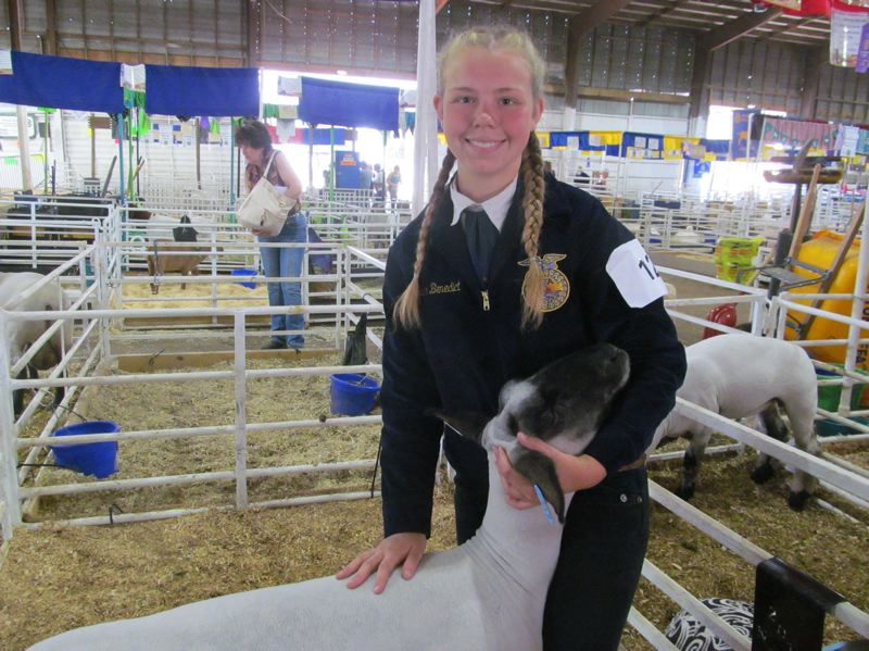 PHOTO BY DICK TRTEK - Kailee Benedict, 17, will be a senior at Rex Putnam High School in the fall. A member of the North Clackamas FFA, she is pictured with a crossbred sheep, chosen as reserve champion for market lambs.