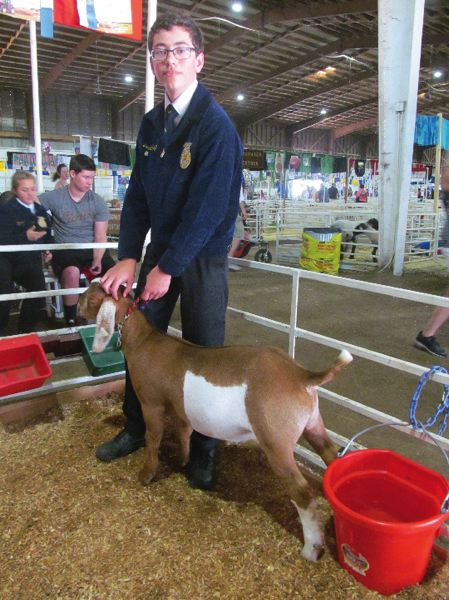 PHOTO BY DICK TRTEK - Joshua Huff, 16, a student at Clackamas High School, is pictured with Bruce. Huff is a member of the North Clackamas FFA; this was his second year showing goats at the county fair.