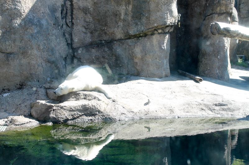 TRIBUNE PHOTO: LYNDSEY HEWITT - Nora sprawled out for a nap in the sun last week.