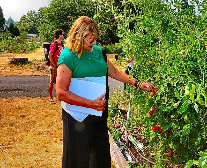 DAVID F. ASHTON - In the Multnomah County Master Gardener Demonstration Garden, USDA Acting Undersecretary Dr. Ann Bartuska examines some of the tomatoes growing there.
