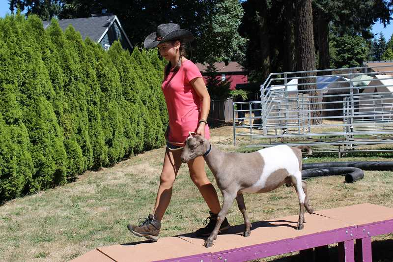 PIONEER PHOTO: KRISTEN WOHLERS - Caroline Romero navigates the course with her goat Elenor.