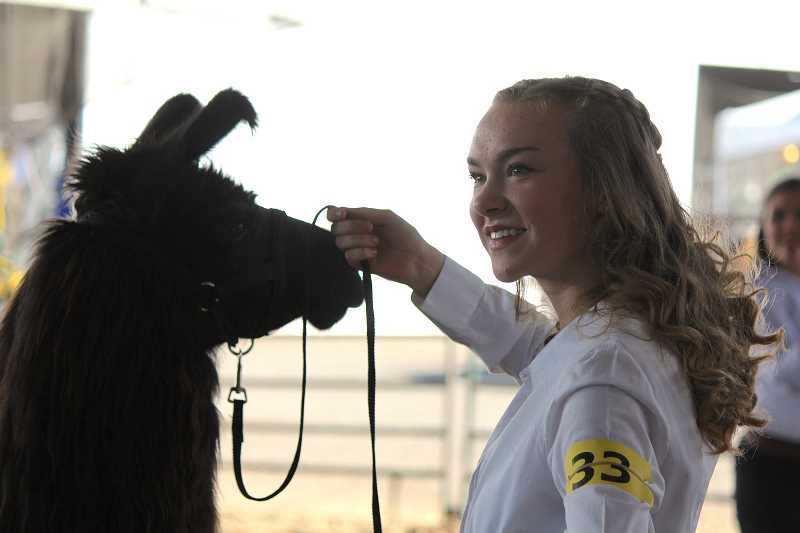 TIDINGS PHOTO: SAM STITES - Aylish Clayton didn't win a buckle this year during the 4-H llama showmanship competition, but she's excited to get back to work with her seven-year-old llama Pax to come back and compete next year.