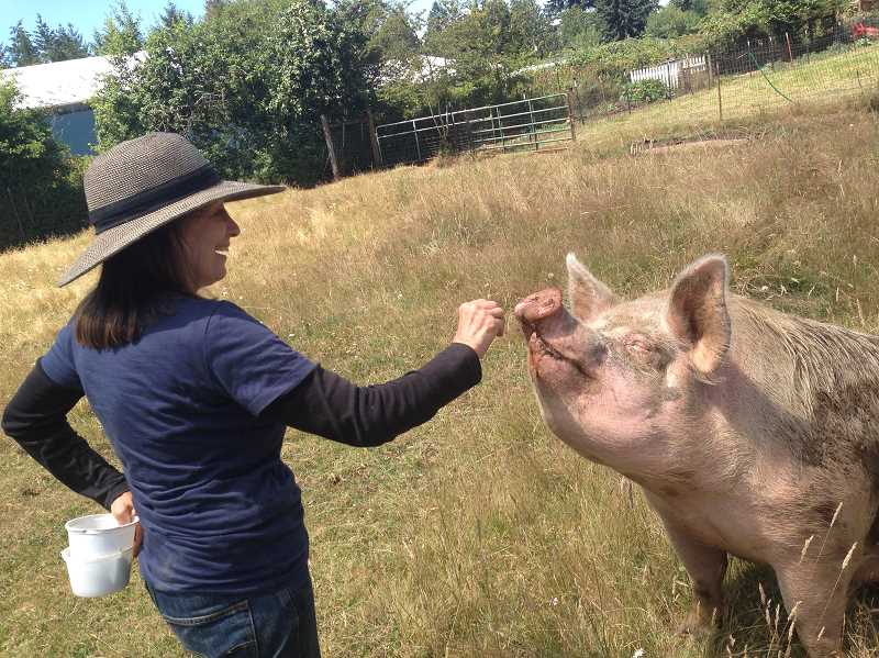 CONTRIBUTED PHOTO - Kit Collins feeds a hungry farm pig at Out to Pasture Animal Sanctuary in Estacada.