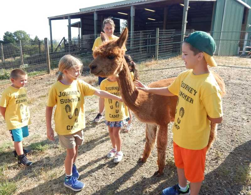 SHERWOOD GAZETTE PHOTO: BARBARA SHERMAN - Kids from Gaarde Christian Church's Journey Summer Camp pet a tame alpaca at Alpacas of Oregon farm outside Sherwood, where the campers watched alpacas eat hay and made fleece balls to take home.