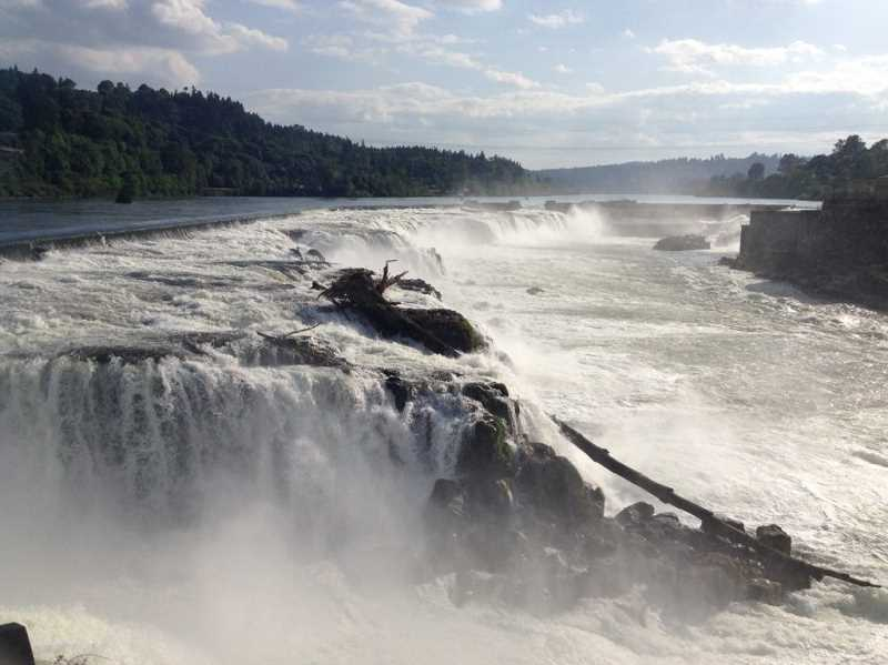 SUBMITTED PHOTO  - Christina Robertson-Gardiner, Oregon City project lead for the Vision and Master Plan of the Willamette Falls Legacy Project, will share information at the Lakewood Center Associates meeting Sept. 21. Get tickets now for the luncheon meeting.
