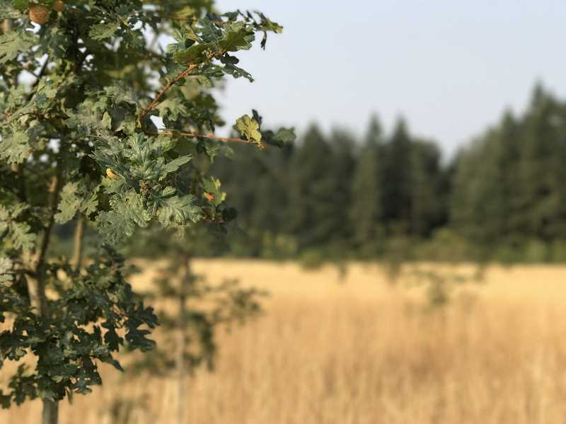 SPOKESMAN PHOTOS: LESLIE PUGMIRE HOLE - Barely more than 20 years ago, the acreage of the future Graham Oaks was under consideration as the site of a landfill or a prison, not the 250-acre nature park it would become.