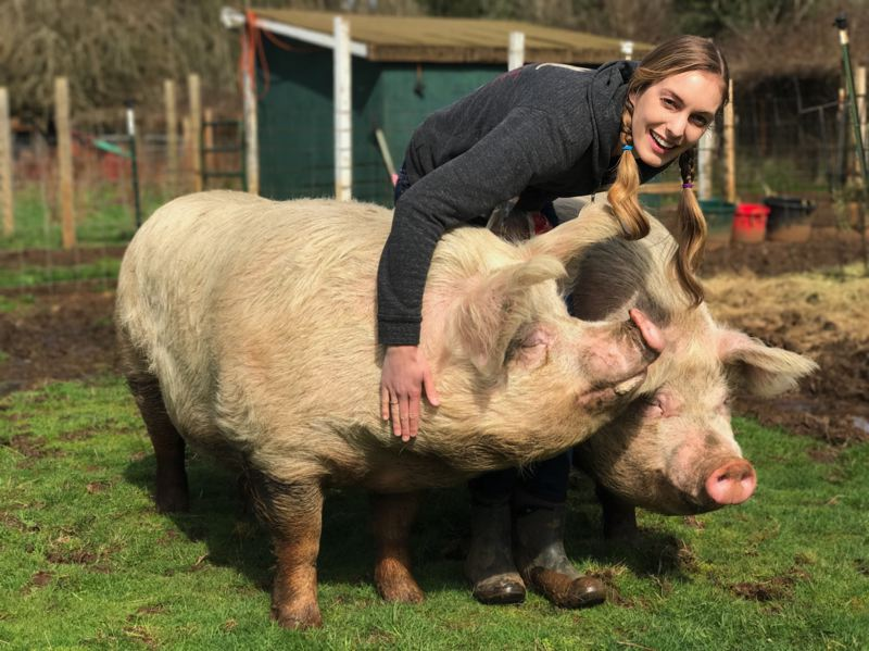 CONTRIBUTED PHOTO: KIT COLLINS - There are a variety of friendly animals to meet at Out to Pasture.