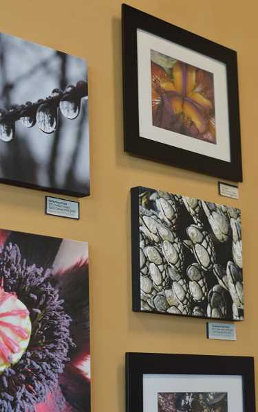 SPOKESMAN PHOTO: CLARA HOWELL - Dawna Bell's photographs will be on display at the Starbucks attached to the Wilsonville Fred Meyer for the next month.