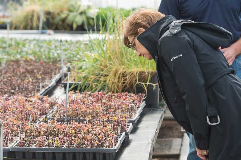 HILLSBORO TRIBUNE PHOTO: JOHN WILLIAM HOWARD - Rep. Suzanne Bonamici surveys seedlings at Eshraghi Nurseries last week.