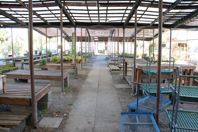 TRIBUNE PHOTO: LYNDSEY HEWITT - Dennis' 7 Dees Garden Center on Southeast Powell Boulevard is still open as it sells the last of its stock.
