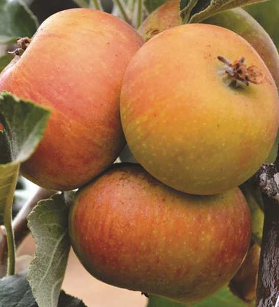 All About Fruit Show will be in Canby Oct. 21-22.