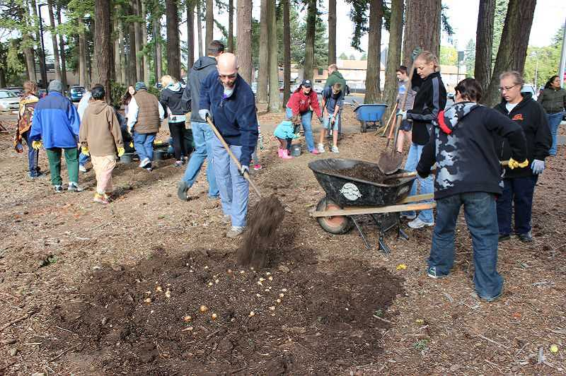 SUBMITTED PHOTO - Volunteers plant bulbs at Shute Park in 2014. The Shute Park event is included in this falls HillsDoer Day, but registration is already full.