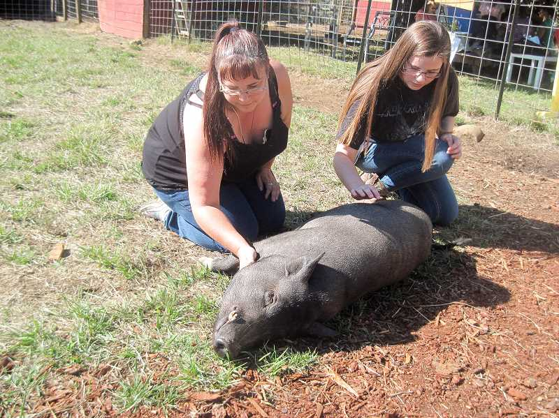 CONTRIBUTED PHOTO - Out to Pasture's annual Cider Squeeze, which took place on Sunday, Sept. 24, connected participants with a variety of friendly animals. Here, a pig enjoys a belly rub.