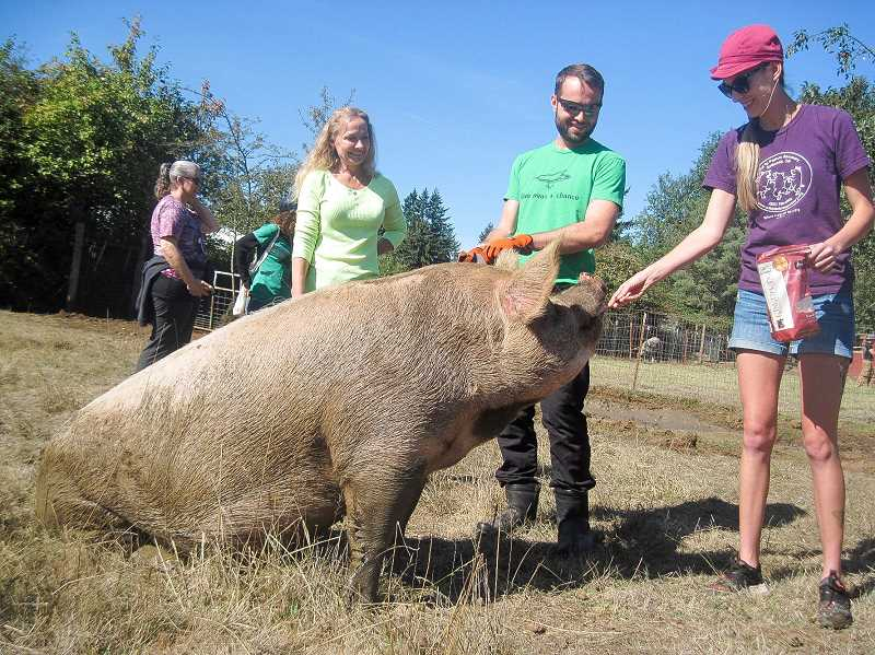 CONTRIBUTED PHOTO - Cider Squeeze atttendees interact with a friendly pig at Out to Pasture's cider squeeze.