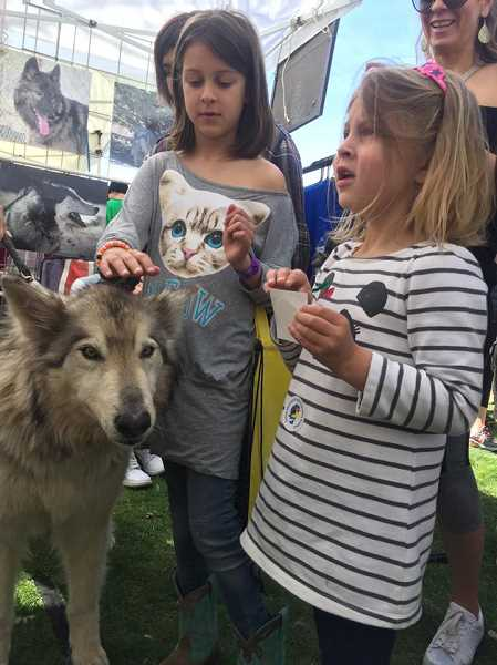 COURTESY PHOTO - The U.S. Wildlife Refuge, a Nevada nonprofit, will be in Hillsboro this Friday and Saturday for a fundraiser at Arm Yourself gun store on TV Highway. The event will allow the public to see live wolves. The nonprofit rescues wolves from across the country.
