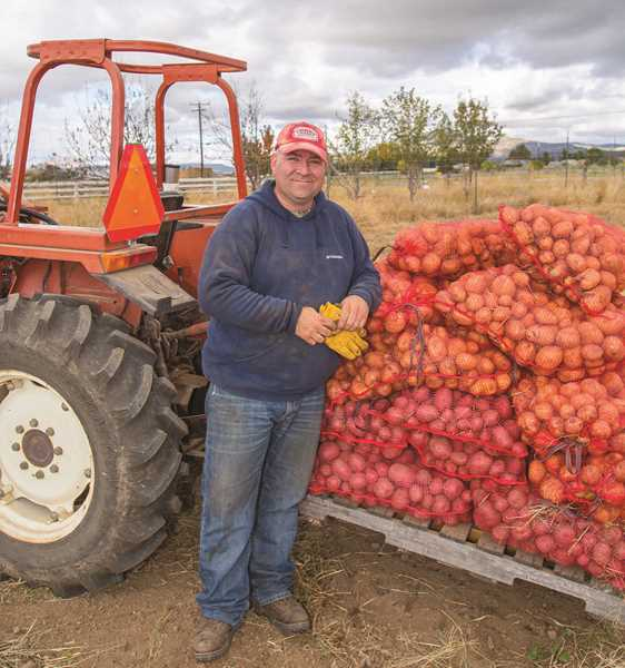 EJ CORONADO/SPECIAL TO THE CENTRAL OREGONIAN - Jeff Papke, of Crook County FFA, shows some of the potato harvest.