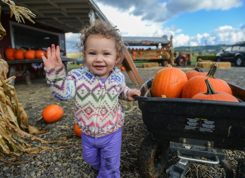 OUTLOOK PHOTO: JOSH KULLA - Aria Gable, 18 months old, of Troutdale, waves as she sorts through the pumpkins at Olson Farm in Damascus during a recent weekday afternoon.