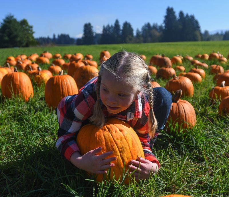 OUTLOOK PHOTO: JOSH KULLA - Anna Perry, 8, picks up a pumpkin on the opening day of Dolan Creek Farm's pumpkin patch on Saturday.