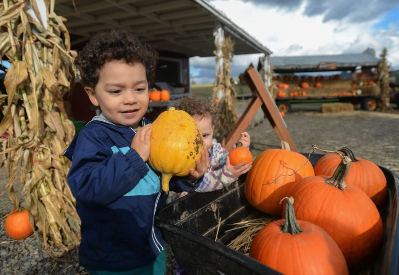 OUTLOOK PHOTO: JOSH KULLA - Emerson and Aria Gable of Troutdale load up pumpkins in their wheelbarrow at Olson Farm in Damascus.