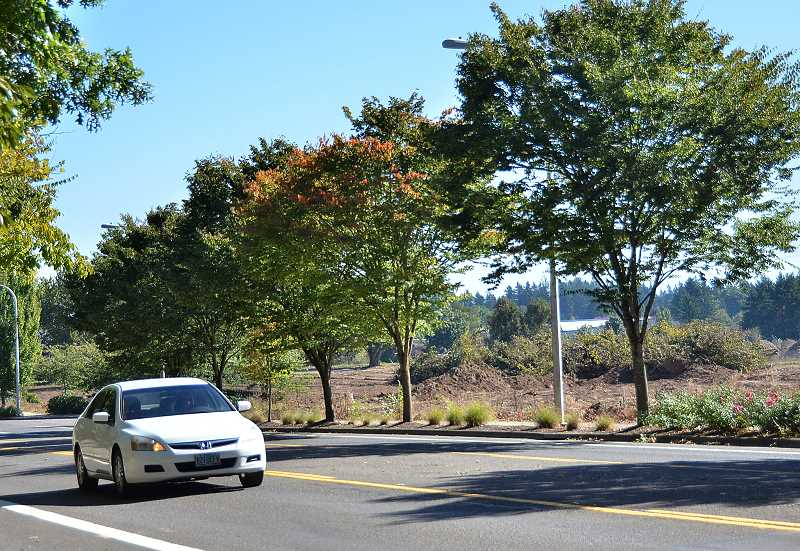 SPOKESMAN PHOTO: VERN UYETAKE - The filbert orchard lining a portion of WIlsonville Road, across from the Fred Meyer gas station, has been removed to the surprise of City officials and neighbors.