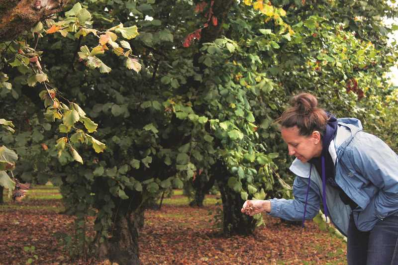 PHIL HAWKINS -- WOODBURN INDEPENDENT - Julie Melcher of Ken & June's Hazelnuts in St. Paul walks through the family's filbert orchards, which are nearing the end of the 2017 harvest season.