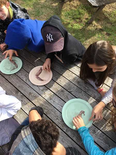 SUBMITTED PHOTO: CATHERINE MELTON - Lakeridge Junior High sixth-graders examine squid parts during an Outdoor School lesson earlier this month. More than 55,000 Oregon students participate in the program every year.