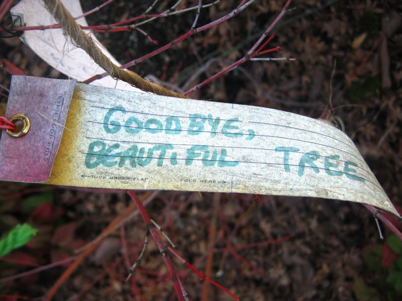 PAMPLIN MEDIA GROUP: MARA STINE  - Removing a beloved elm can be heartbreaking. This note was left on an infected elm marked for removal last summer.