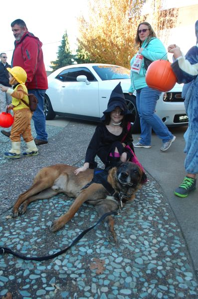 PHOTO BY: RAYMOND RENDLEMAN - Ellie Hamburg, 8, pets an Oregon City Police Department canine officer in Liberty Plaza on Oct. 31.
