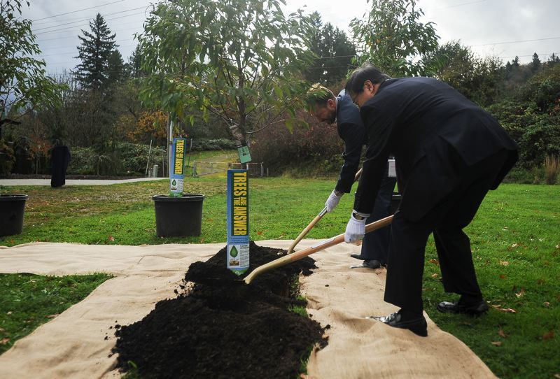 OUTLOOK PHOTO: JOSH KULLA - Gresham Mayor Shane Bemis and Ebetsu Mayor Noboru Miyoshi shovel ceremonial spadefuls of earth over a cherry tree being planted at Main City Park.