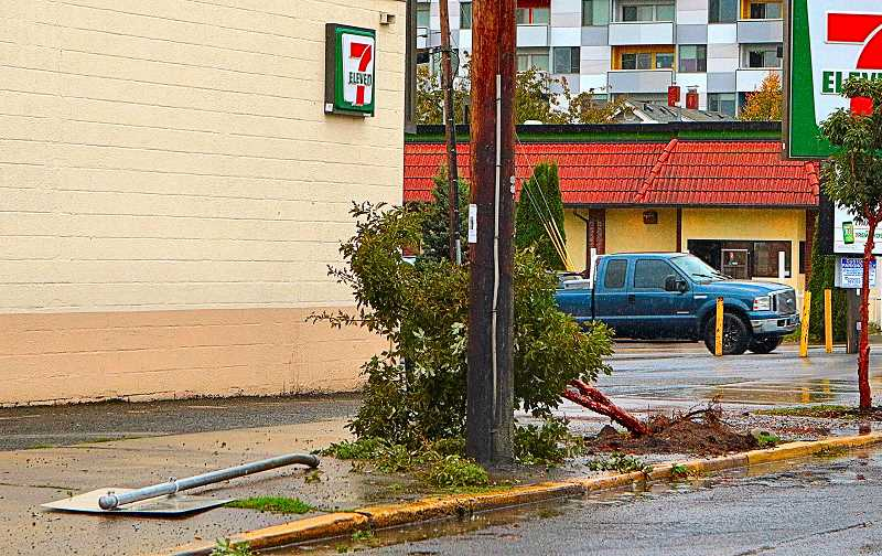 DAVID F. ASHTON - Making a fast getaway, the gunman sped out of this Sellwood parking lot, and mowed down a tree and a street sign in the process.