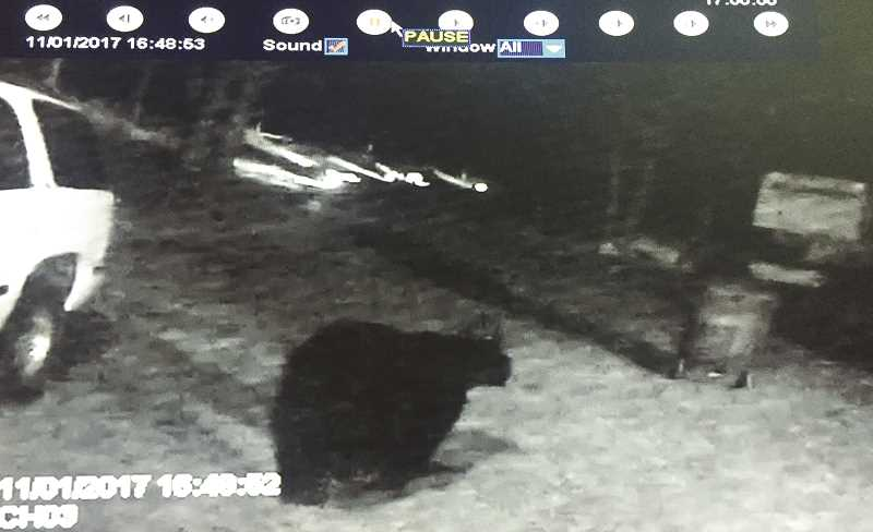 PHOTO SUBMITTED BY SHAWN AUGUSTINE - Security cameras at the home of Shawn and Candice Augustine caught a black bear roaming their property near Ochoco Lake earlier this month.
